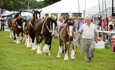 Driffield Agricultural Show
