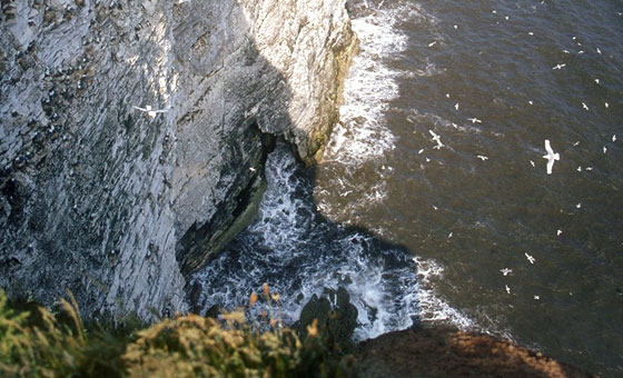 Bempton Cliffs, Flamborough Head